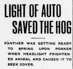 Auto Hog Panther